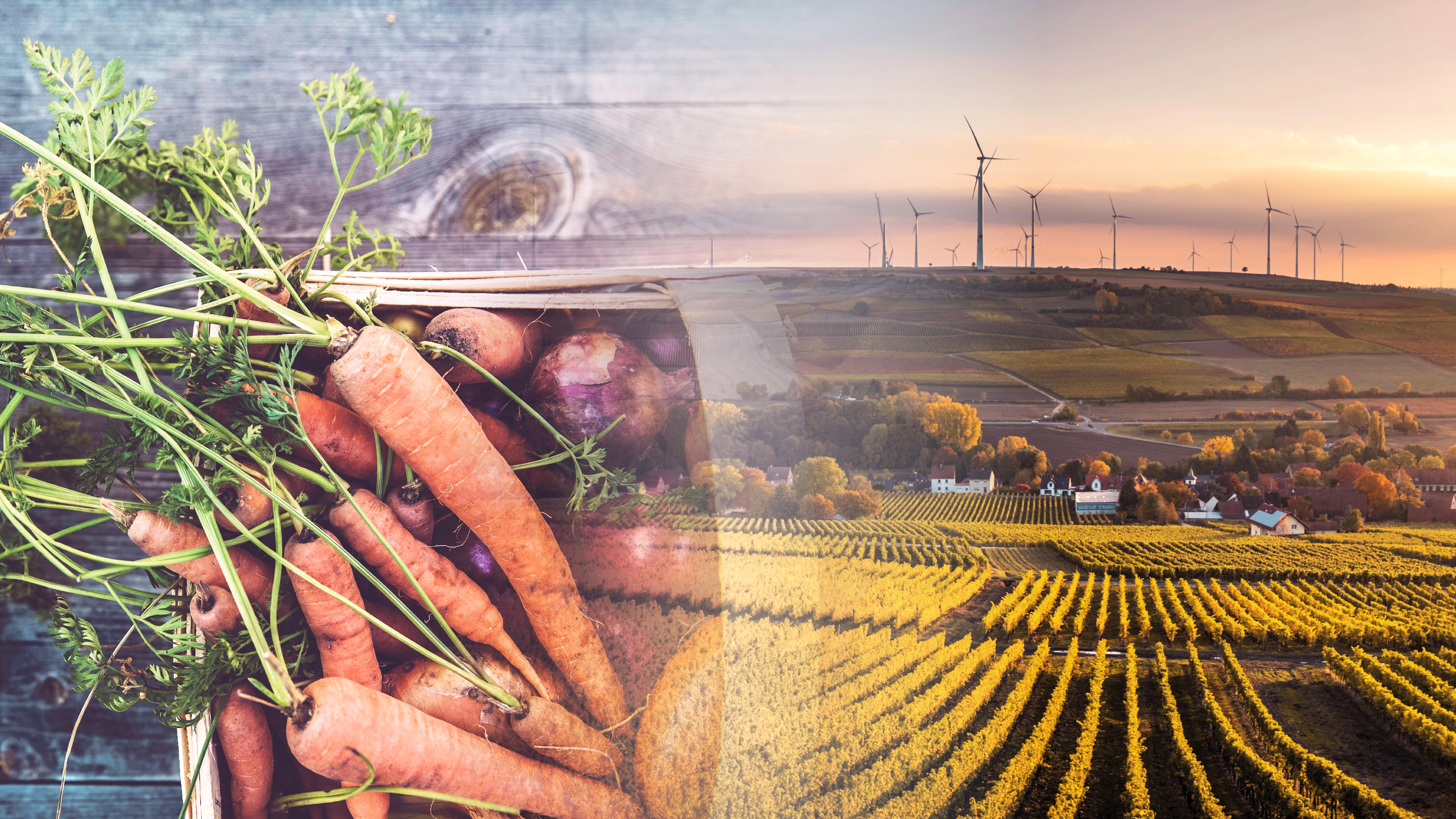 Farm to Fork Strategy lacks ambition to provide farmers with solutions