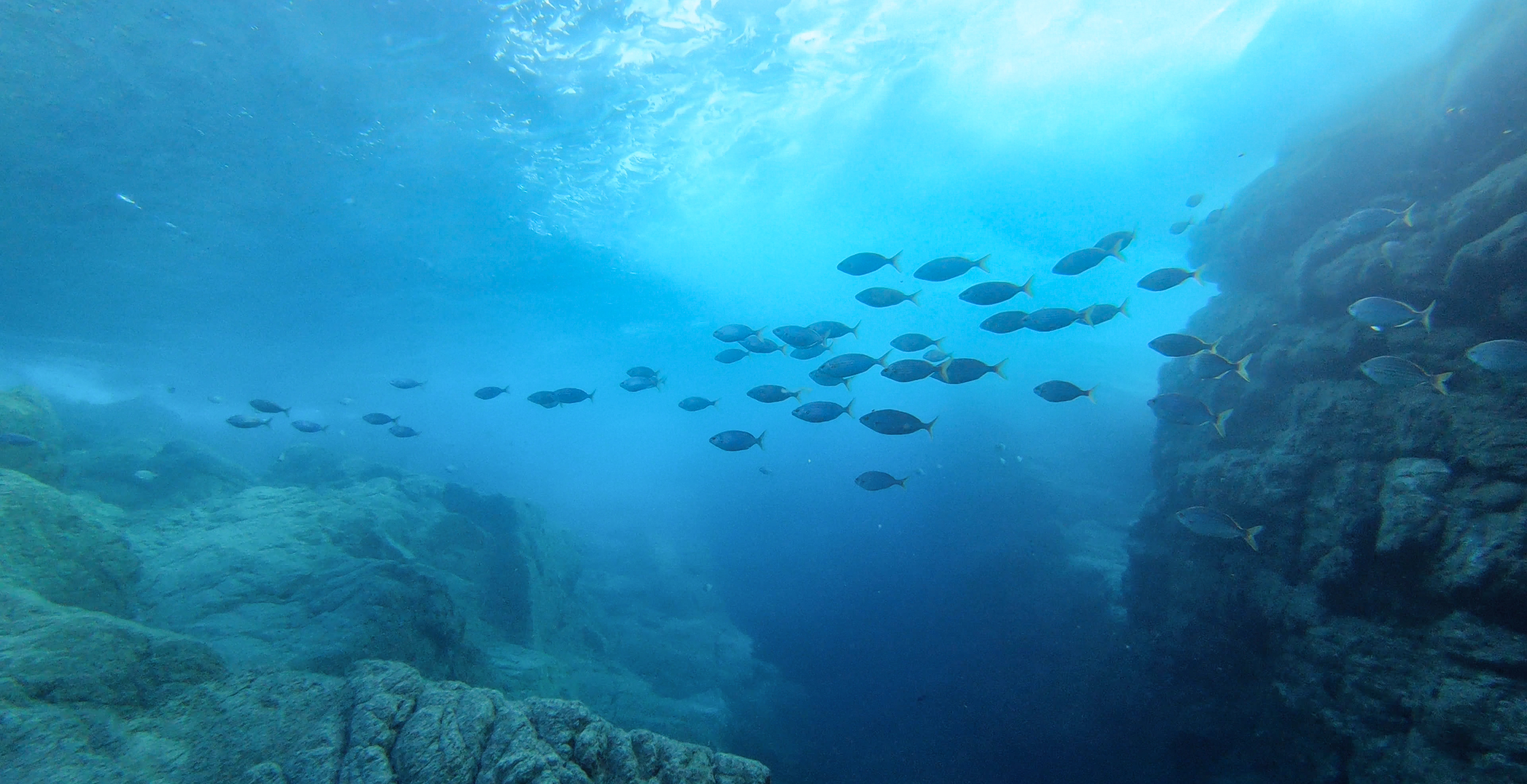 Rebuilding fish stocks in the Mediterranean Sea: Don't pass the buck to the fishermen